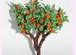Почему не растет апельсиновое дерево