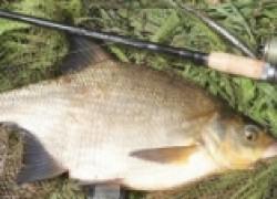Прикормка для рыбалки на кукурузной основе