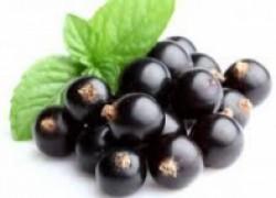 Черная смородина – для здоровья