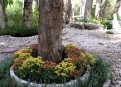 Что посадить в тени деревьев