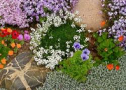 Растения – коврики для вашего цветника