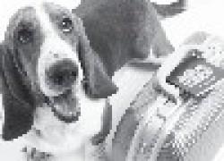 Тепловой удар: первая помощь пострадавтрадавшему животному