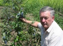 Мы выращиваем голубику в Краснодарском крае!