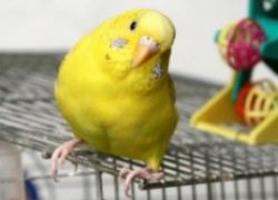 Где поместить клетку для птицы