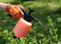 Подкормка растений медью