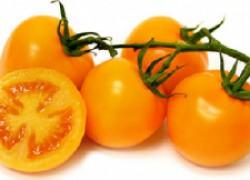 Посадите оранжевые помидоры