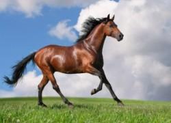 Препараты для лошадей