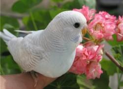 С попугаем беда
