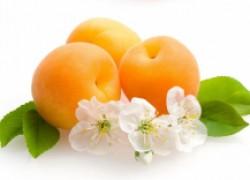 Выбираем сорта абрикоса, которые будут плодоносить