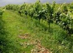 Открытие молдавских виноградарей