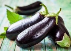 Можно ли баклажаны выращивать без рассады?