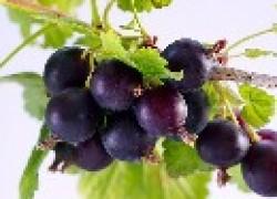 Гибриды ягодных культур