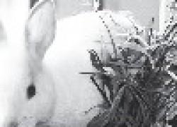 Силос для кроликов