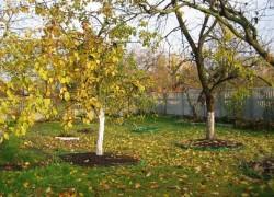 Как подготовить деревья к зимовке