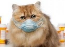 Если кошка стала чихать