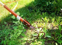 Сорняки в огороде - только на пользу