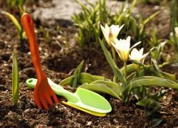 Зеленые санитары почвы