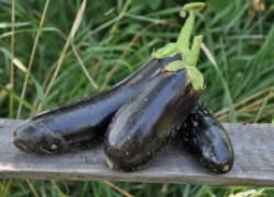 Главный секрет моих урожаев – любовь к растениям