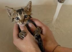 Шампунь для котенка