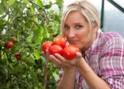 Советуем посадить: 10 самых перспективных сортов помидоров