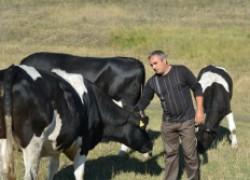 Верхнетуровский фермер разведет племенных коров