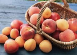 Порно про персик и обрикосик фото 113-855