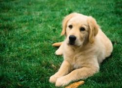 Кормим собаку костями. Это правильно?