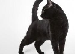 Почему у кошки слюни текут