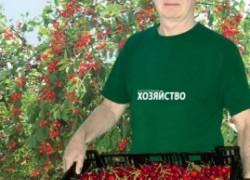 Как посадить черешню и получить хороший доход