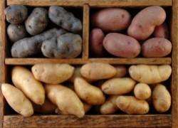 Как вырастить картошку из супермаркета