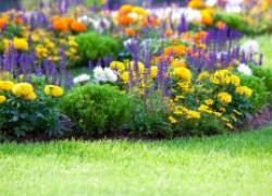 Цветы на вашем участке: позаботьтесь о будущей весне осенью