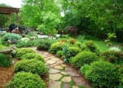 Старому саду вторую молодость
