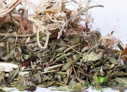 При кашле курильщика поможет травяной сбор