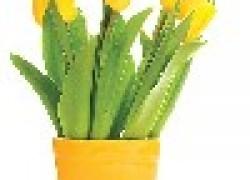 Как сохранить свежесрезанные цветы дольше