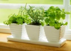 Как выращивать сочную зелень круглый год
