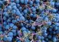 От горошения винограда