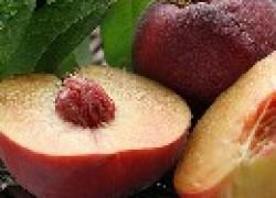 Персик-слива и нектарин