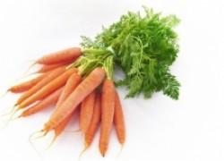 Морковка на семена