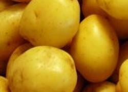 Что угрожает картофелю в погребе