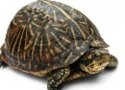 Пострадала черепаха