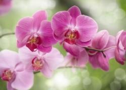 Орхидея увяла – что дальше?