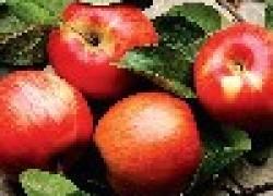 Самые лежкие яблоки