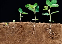 Народные стимуляторы роста