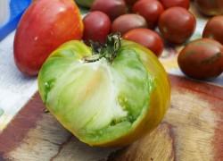 Почему помидоры внутри зеленые
