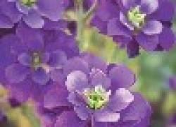 Посадка цветов рассадой
