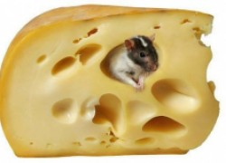 Крыса, сыр и человек