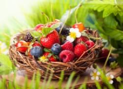 Какие  ягоды самые рентабельные для выращивания