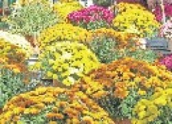 Осень: пора ярких красок