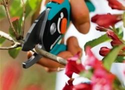 Как правильно ухаживать за садовым инструментом