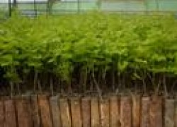Зеленые саженцы и зимой, и летом